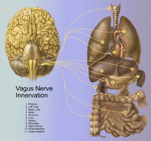Vagus nerve, emotions & yoga